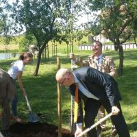 boom-planten-lustrum-streekfonds